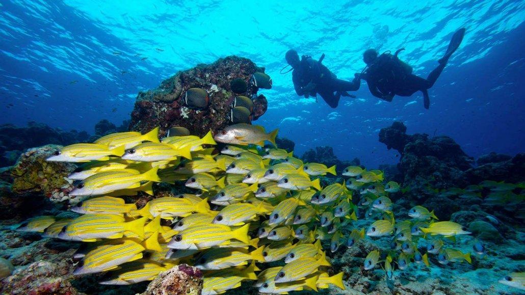 Maldives Scuba Divers