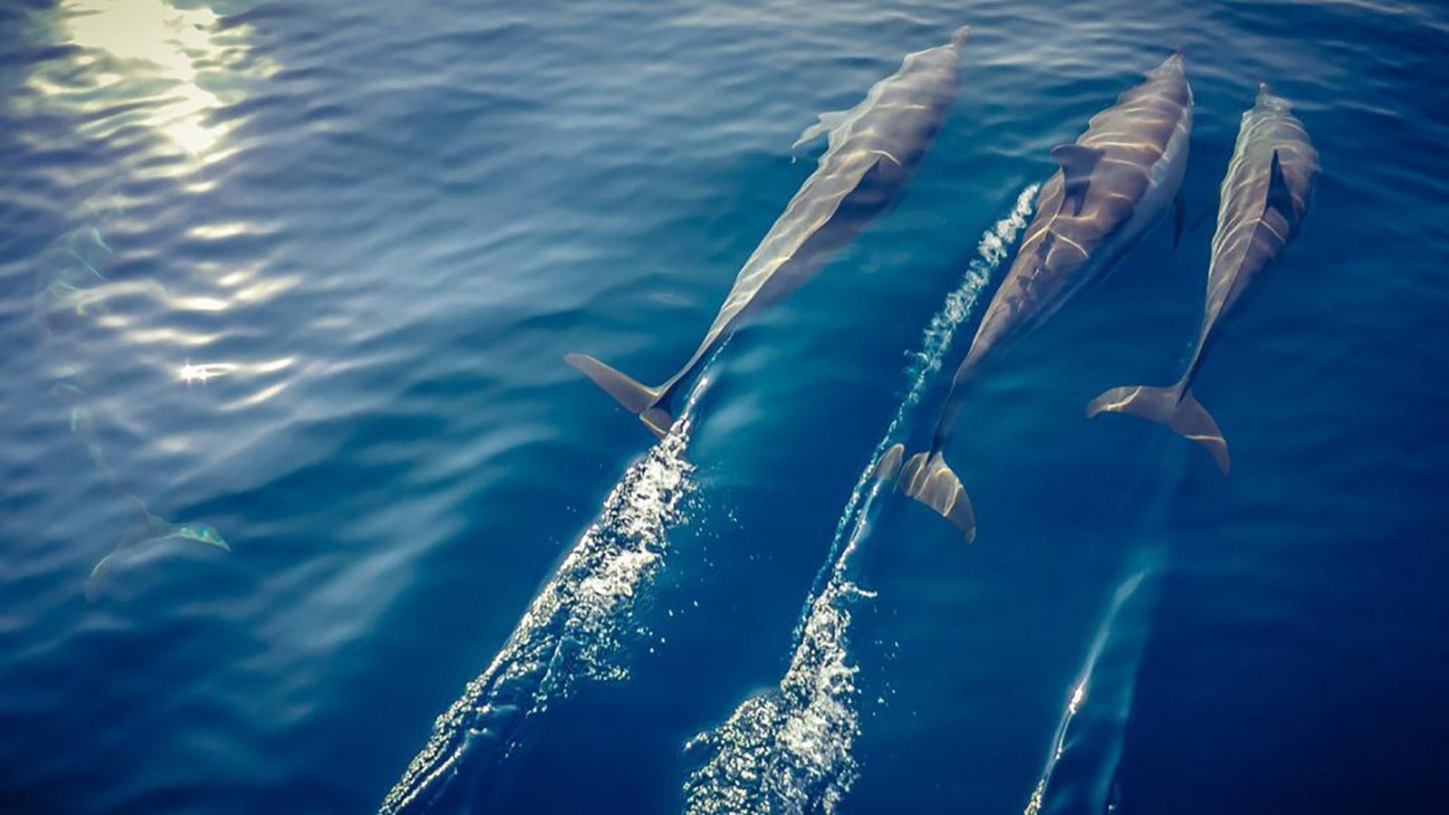 Maldives dolphin excursion