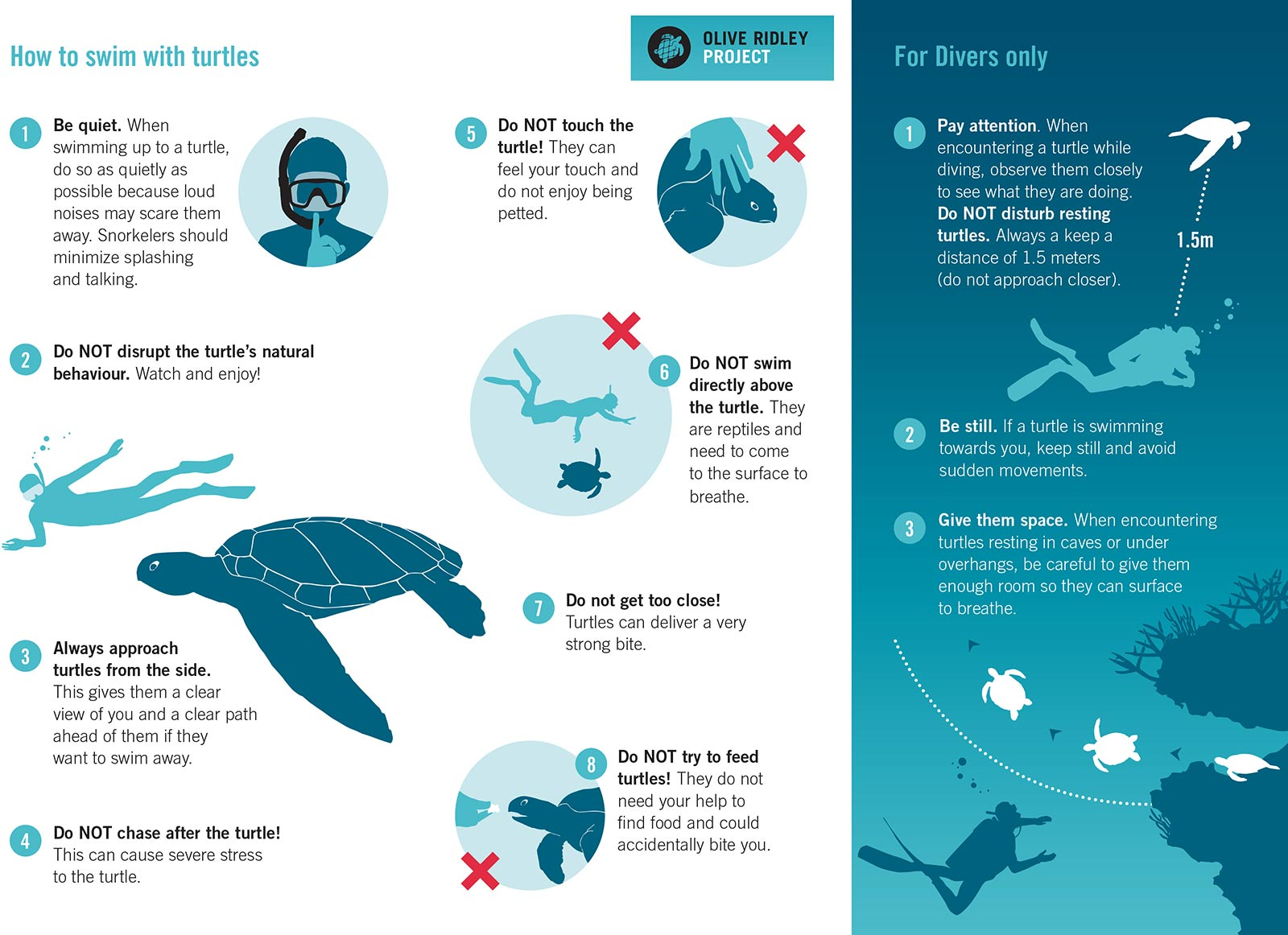 Olive Ridley Project Turtles