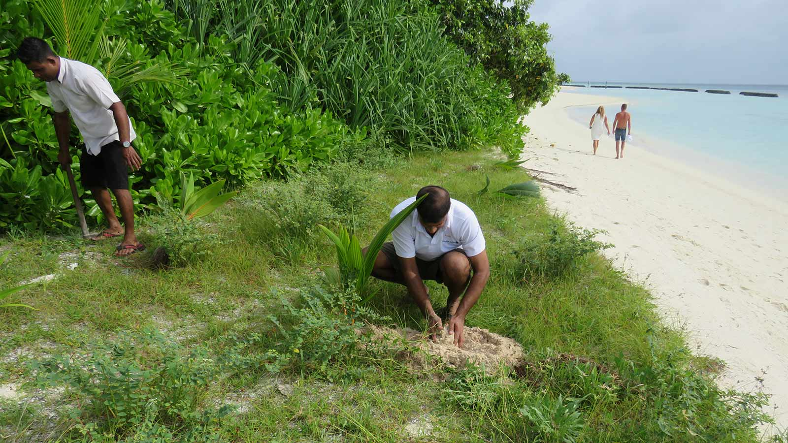 Maldives Tree Planting